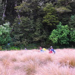 Tussocks and climbs on Green Lake Track